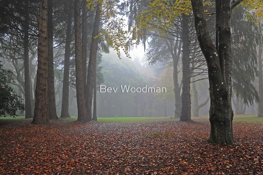 Misty Mystery - Mt Wilson NSW Australia by Bev Woodman