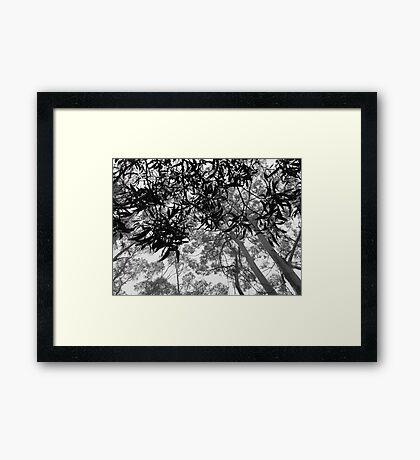 A Walk in the Clouds #7 Framed Print