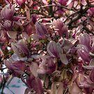Sweet Spring by Monica M. Scanlan