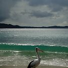 """""""If Only I Could Surf said the Pelican....If Only I Could Fly said I"""" by Of Land & Ocean - Samantha Goode"""