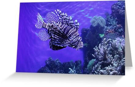 Lion Fish - Denver Aquarium by Margot Ardourel