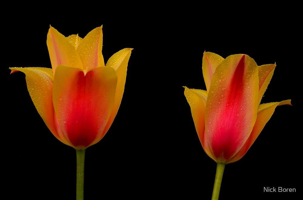 Twins On Black by Nick Boren