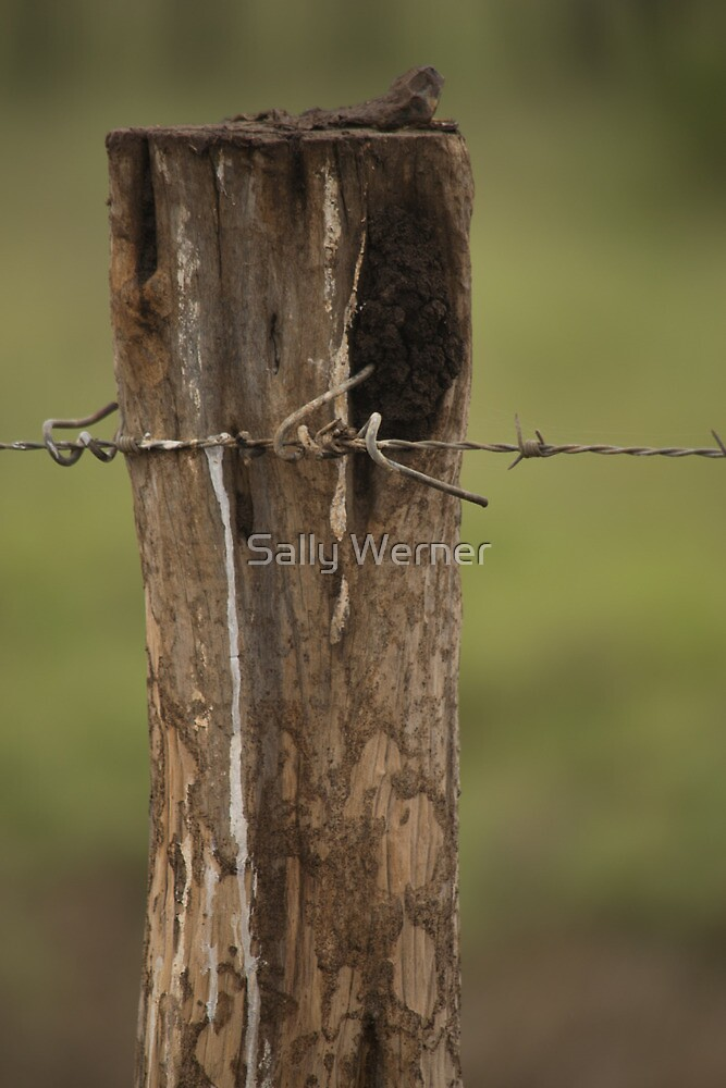 Fence Post with Barb Wire - Well Plains, QLD by Sally Werner