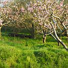 Martin's Peach Orchard by Michael  Dreese