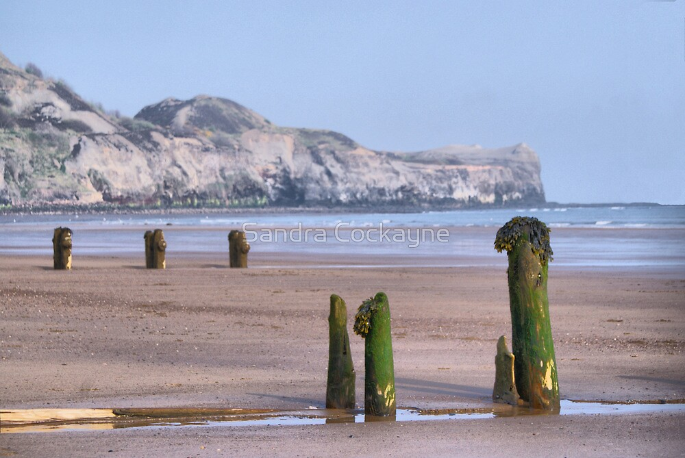 Old Groynes at Sandsend Beach by Sandra Cockayne