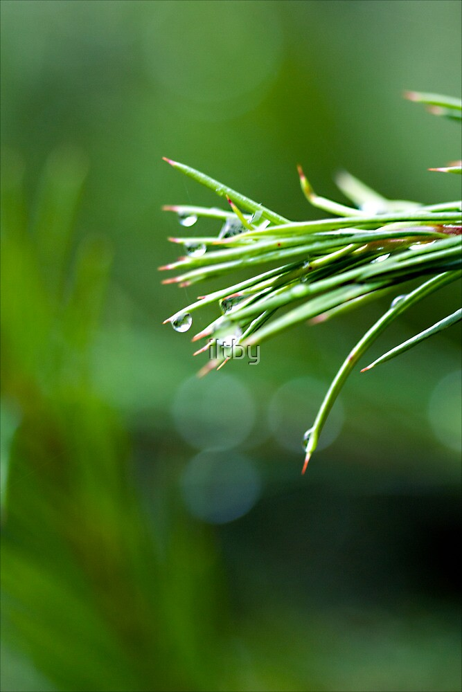Strands of Green by iltby