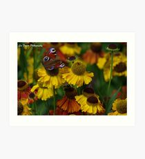 Blooming colourful Art Print