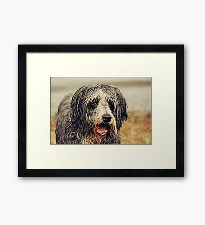 "The ""wet look"" Framed Print"