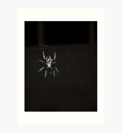 Along came a spider... Art Print