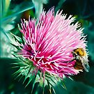 Grey Lady Thistle and Bee - oil painting of a wild thistle by James  Knowles