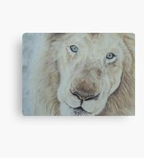 Casper the White Lion Canvas Print