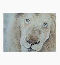 Casper the White Lion Photographic Print