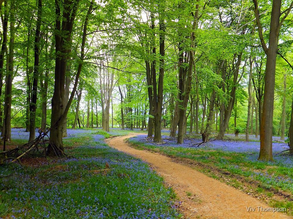 Bluebell Walk by vivsworld