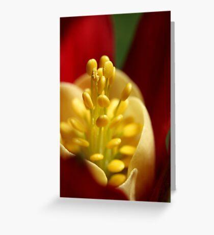 Velvet Wrap Greeting Card