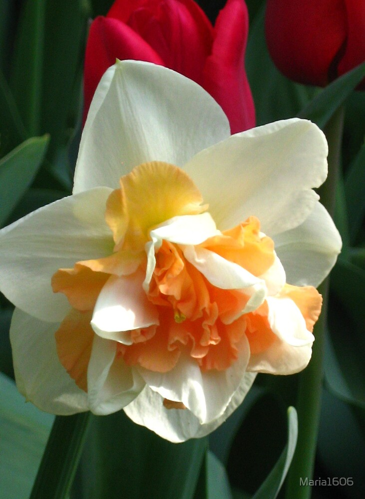 My new daff by Maria1606