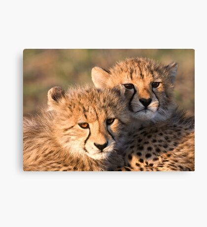 Sibling Comfort Canvas Print