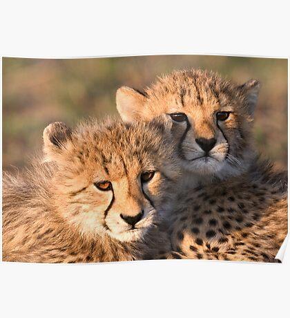 Sibling Comfort Poster