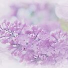 Lilac essence by aMOONy