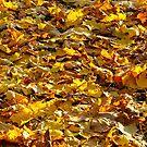 Fallen leaves by Elzbieta Fazel