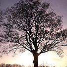 silhouetted oak by Hucksty