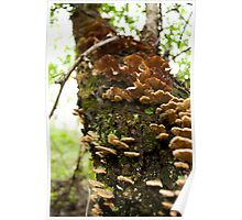 Natural Tree Shelves Poster