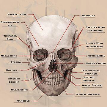 Skull 5 by pratt-face