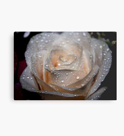 Rose and Raindrops 2 Metal Print