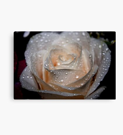 Rose and Raindrops 2 Canvas Print