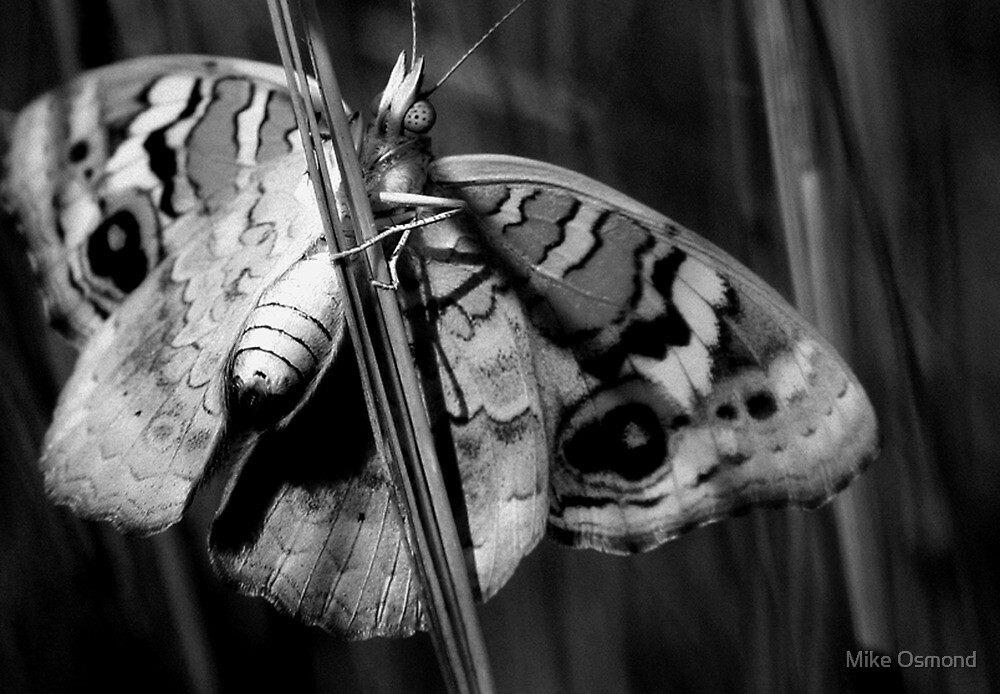 Natural Beauty (B&W) by MikeO