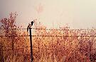 Bird on a Wire by yolanda