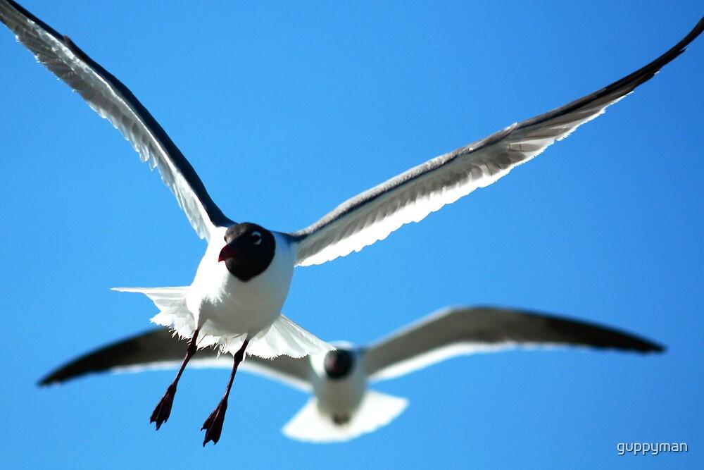 Seagulls by guppyman