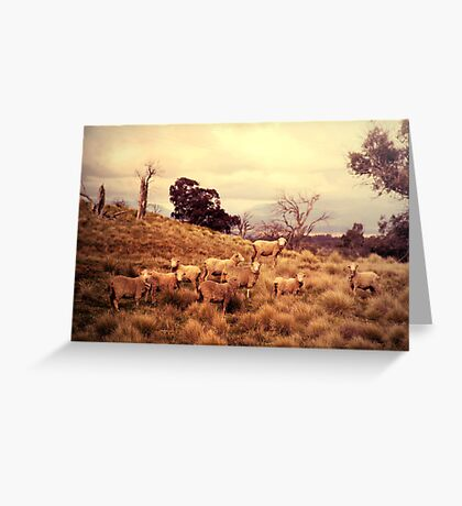 Sound of Sheep Greeting Card