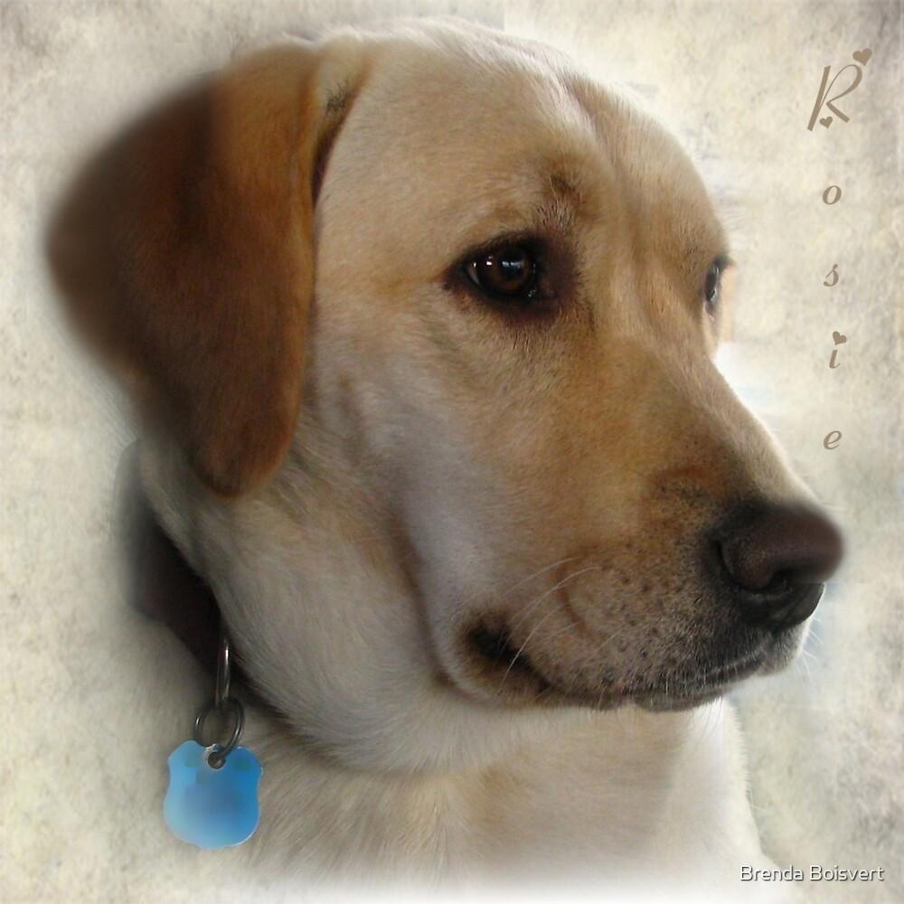 My Girl Rosie by Brenda Boisvert