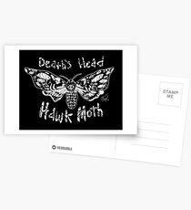 Death's Head Hawk Moth Postcards