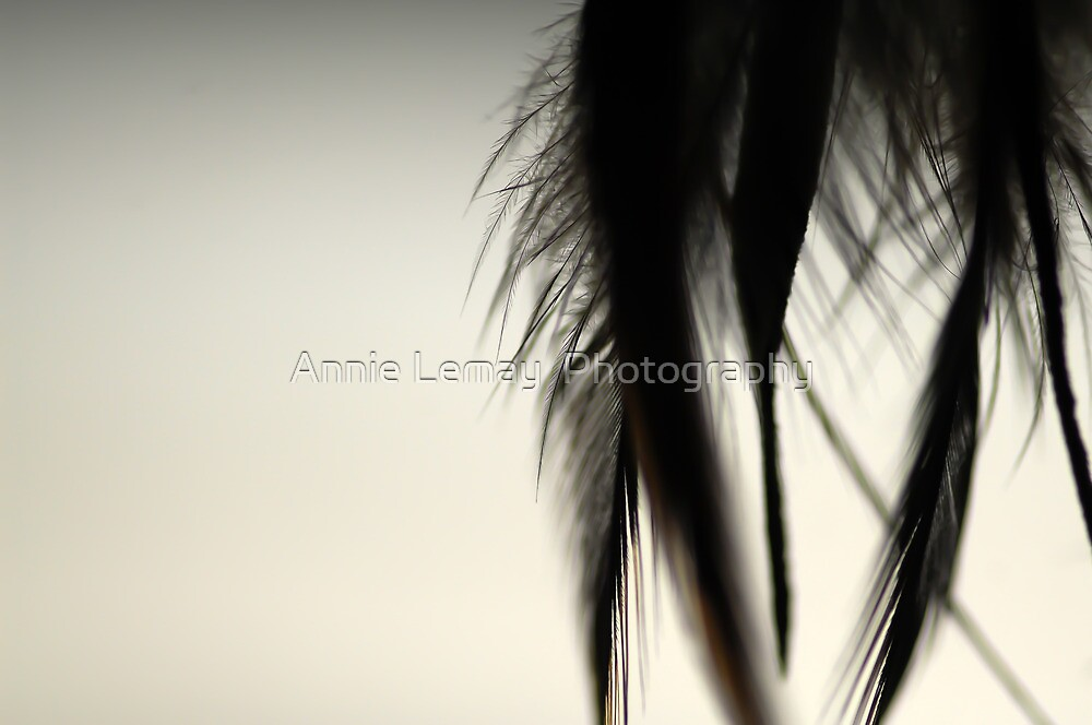 Feathers of Bibi by Annie Lemay  Photography
