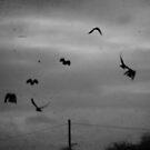 Crows by Nikki Smith