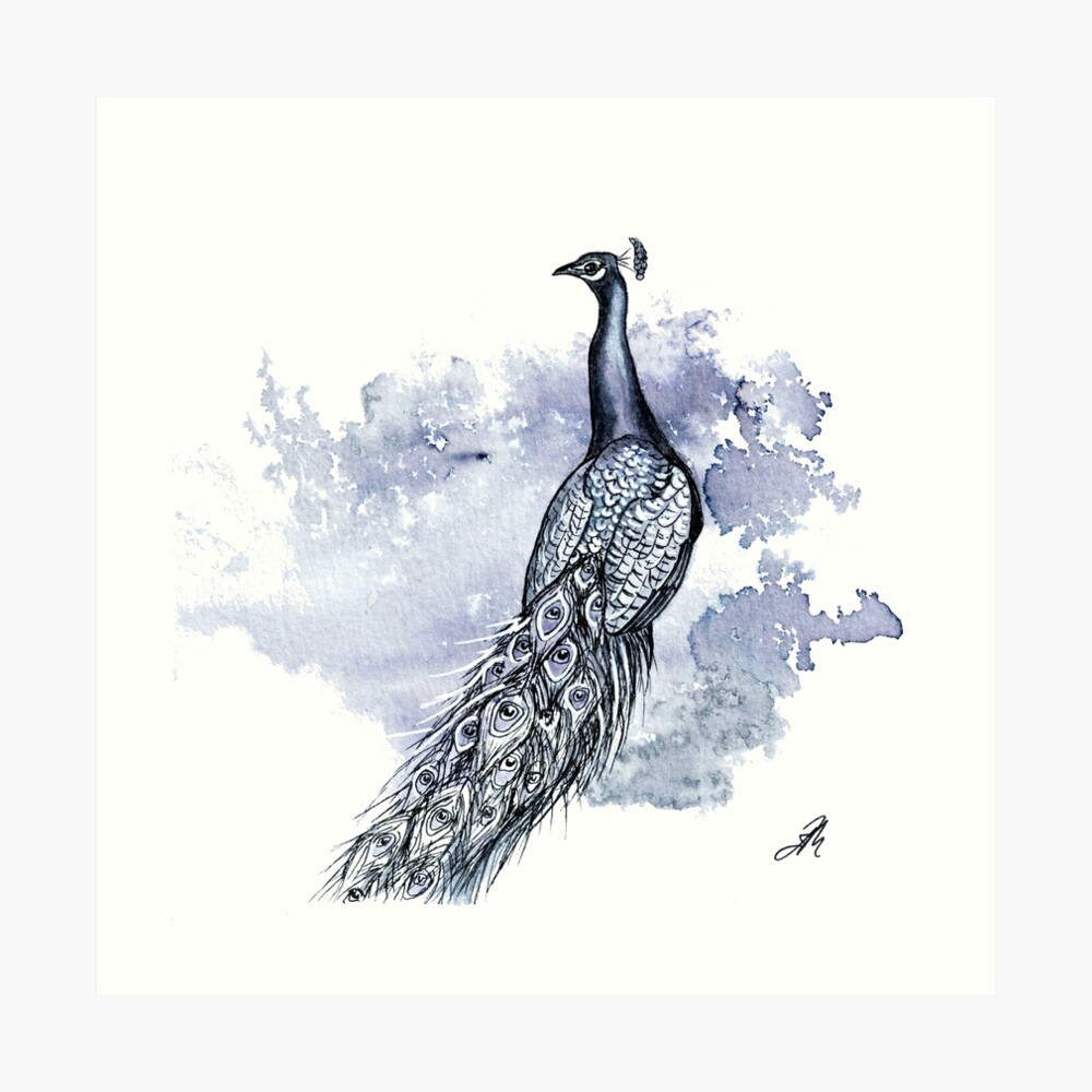 Pretty Peacock Ink Drawing Art Print