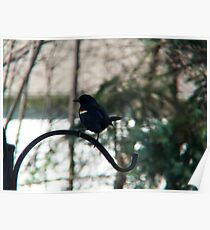 Red Winged Blackbird  Poster