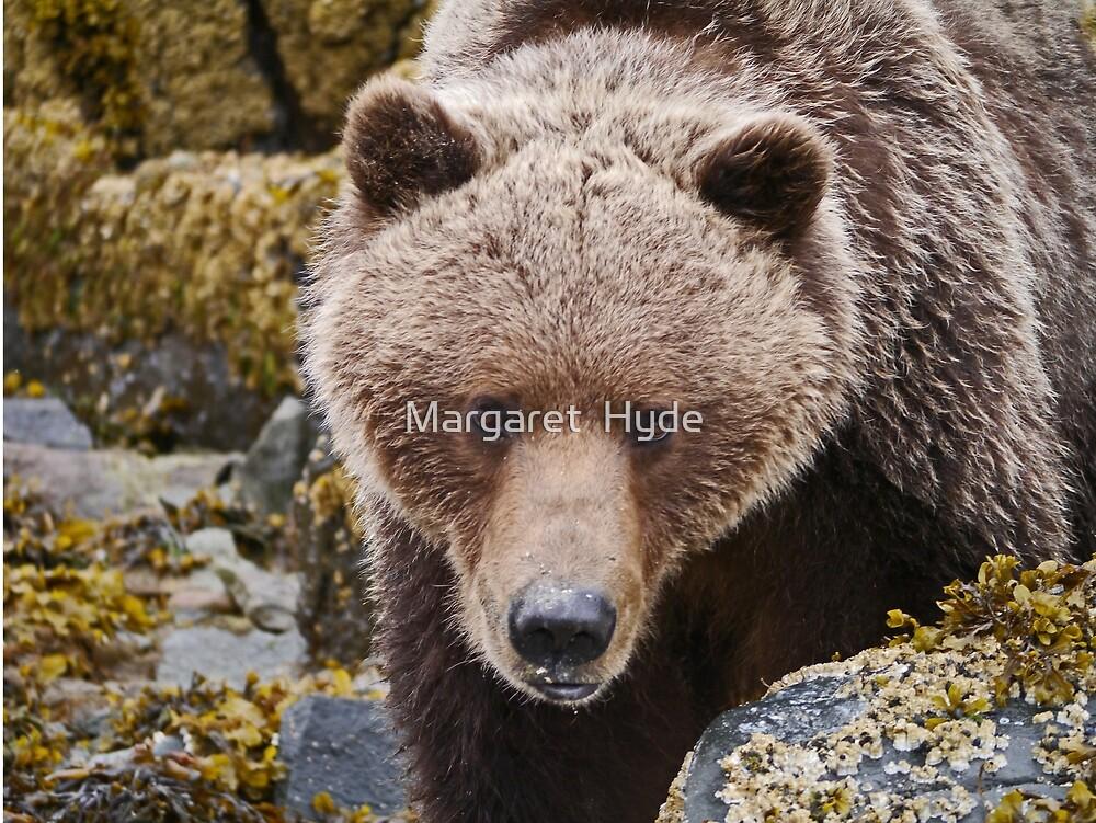 Alaskan Brown Bear by Margaret  Hyde