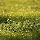 Raindrops on Green Grass by Kelly Chiara