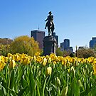 Spring Has Sprung In Boston.... Finally! by Lee d'Entremont