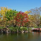 Swan Boats in The Boston Public Garden. by Lee d'Entremont