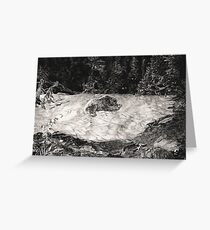 Bear In Forest Alone Greeting Card
