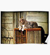 Basking Momma Cat Poster