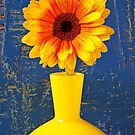 Gerbera Daisy In Yellow Vase by Garry Gay