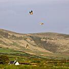 linnets flight of Eire by Edward  manley