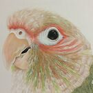 Kijani, the Cinnamon Green Cheek Conure by DrawingMom