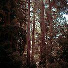 Mt Danndenong Forest by Steven Vogel