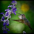 Hummingbird by Saija  Lehtonen