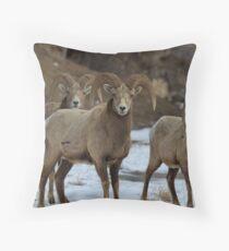 3 Rams Throw Pillow